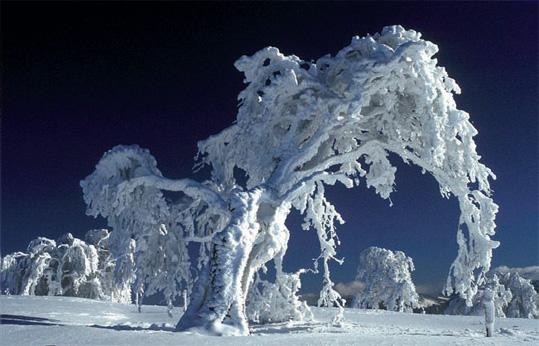 snow_beast